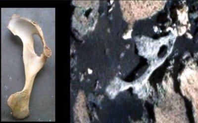 тазовую кость инопланетянина